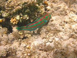 Port Ghalib march 2006-0029.jpg