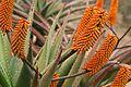 Pretoria Botanical Gardens-015.jpg
