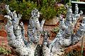 Pretoria Botanical Gardens-026.jpg
