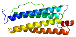 Protein FTH1 PDB 1fha.png