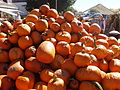 Pumpkins in NH 01.jpg
