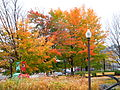 Quebec city foliage.jpg