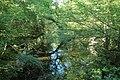 Réserve naturelle régionale des étangs de Bonnelles le 26 mai 2017 - 64.jpg