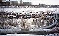Red River, Winnipeg - panoramio (8).jpg