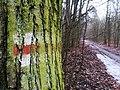 Red trail in Wielkopolski National Park (3).jpg