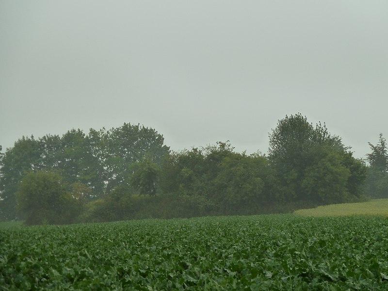 Tumulus de Hodeige, Remicourt/Oreye, Belgique