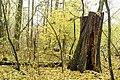 Rezerwat przyrody Morysin, park 10.jpg