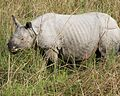 Rhino 690V6171 - Flickr - Lip Kee.jpg
