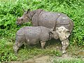 Rhinoceros in Nepal with child.JPG