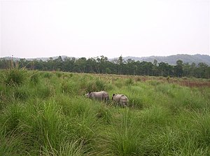 Terai-Duar savanna and grasslands - Rhinoceros unicornis in Chitwan National Park, Nepal