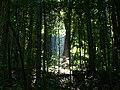 Rich Creek-27527-3.jpg