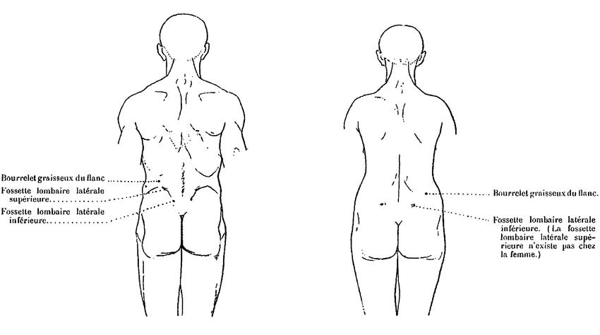 Anatomie Artistiquetome 1 Wikisource