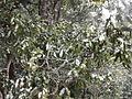 Rishikesh haridwsurkanda deviar (232).JPG