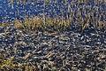Robenhauser Riet 2012-01-18 14-42-08.JPG