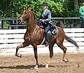 Rock Creek Spring Horse Show 2008 (2673757483).jpg