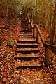 Rouge Park Stairs (180691559).jpeg