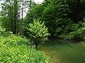 Rzeka Łyna, okolice Łańska - panoramio.jpg