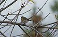 SK-Bird2.jpg