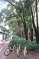SZ 深圳市 Shenzhen 福田 Futian 彩田路 Caitian Road yellow OFO bike parking n trees Sept 2017 IX1.jpg