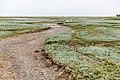 Saltholm - panoramio (9).jpg