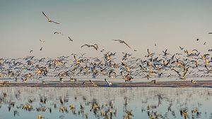 Salton Sea State Recreation Area - Birds at the Salton Sea State Recreation Area