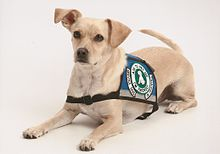 Psychiatric Service Dog Air Travel Authe