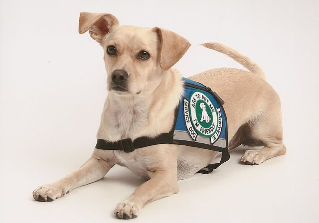 Assistance Dogs Canada