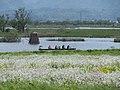Sceanry of the lagoon Fukushimagata 20160504a.jpg