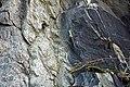 Schist & amphibolite (Ordovician; Marlboro West Route 9 roadcut, Vermont, USA) 2.jpg