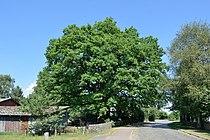 Schleswig-Holstein, Wulfsmoor, Naturdenkmal NIK 8345.JPG