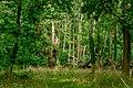 Schlosspark Laxenburg 8635.jpg