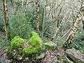 Scotgate Wood, Honley - geograph.org.uk - 1607779.jpg