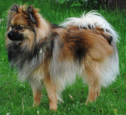 Image Result For Can Dogs Est
