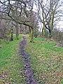 Scripton Gill - geograph.org.uk - 346255.jpg
