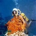 Scuba diving, Great Barrier Reef, 1980s.jpg