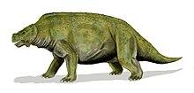 scutosaurus skeleton  Restoration