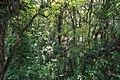 Selvatura Adventure Park 05.jpg