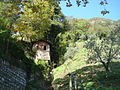 Sentiero dell'olivo Gandria 05.JPG