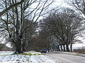 Shapwick, avenue of beeches in snow - geograph.org.uk - 1152948.jpg