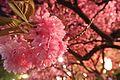 Shimoshiroganecho, Hirosaki, Aomori Prefecture 036-8356, Japan - panoramio (1).jpg