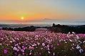 Shirakimine Highland - panoramio.jpg