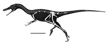 Shishugounykus inexpectus skeletal reconstruction.png