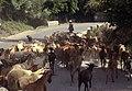 Sierra Nevada may 1999 25.jpg