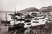 Sildefiske i Bodø