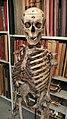 Skeleton (974425017).jpg