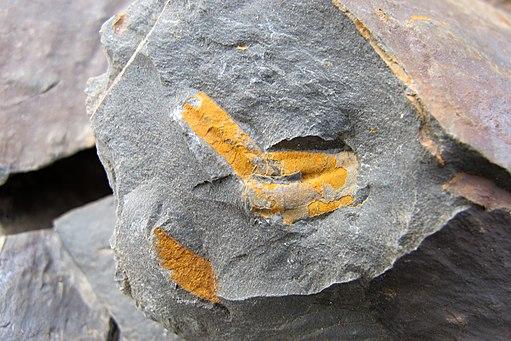 Skryjsko-tyrovicke kambrium (1)