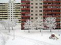 Snowy winter in Priisle.jpg