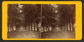 South Broad Street, Savannah, Ga, from Robert N. Dennis collection of stereoscopic views 3.png