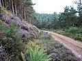Southern Upland Way - geograph.org.uk - 221609.jpg