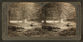 Spangler's Spring, Gettysburg, Pa, from Robert N. Dennis collection of stereoscopic views.png